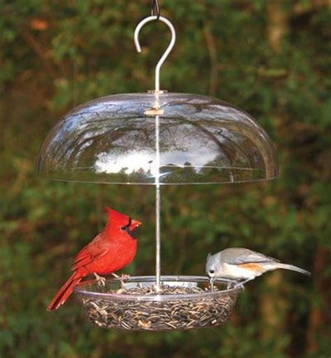 best 28 how often do birds eat how often do you feed