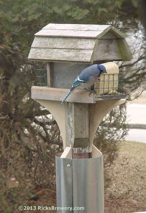 squirrel baffle bird feeder plans  squirrel proof bird feeders  pinterest