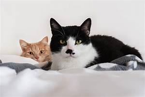Katze Im Haus Halten : neue katze herzlichen gl ckwunsch tierarztpraxis dr ~ Lizthompson.info Haus und Dekorationen