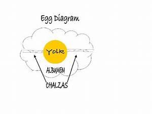 Pine Hill Publications  Inside An Egg