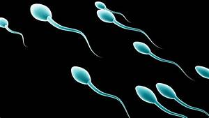How To Treat A Low Sperm Count