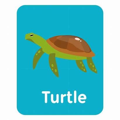Flashcard Turtle Vocabulary Tartaruga Vocabulario Tarjeta Vexels