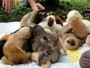 Baby sloths love to hug... | Animals, animals, animals ...