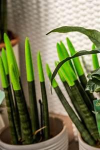 Zimmerpflanzen Für Schlafzimmer : raumklima mit zimmerpflanzen verbessern ~ A.2002-acura-tl-radio.info Haus und Dekorationen