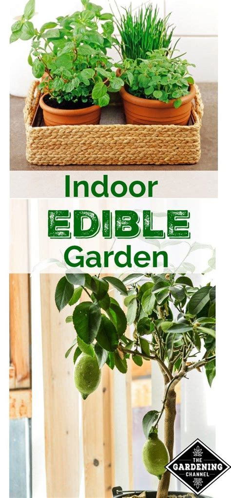 grow  indoor edible garden  place  home