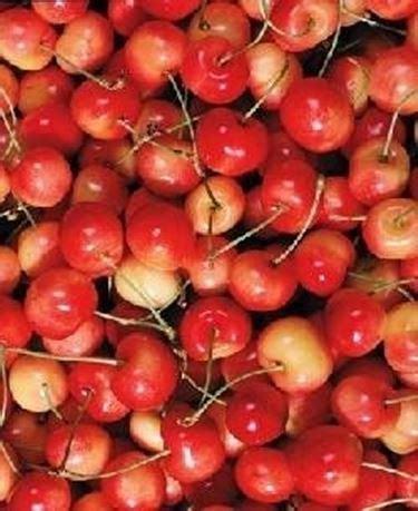 Impollinatore ciliegie - Domande e Risposte Orto e Frutta