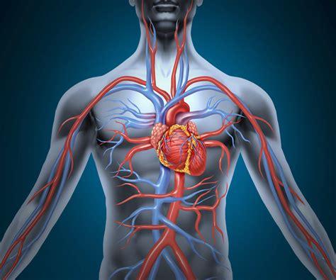 vasi arteriosi medicina vascolare citt 224 della salute