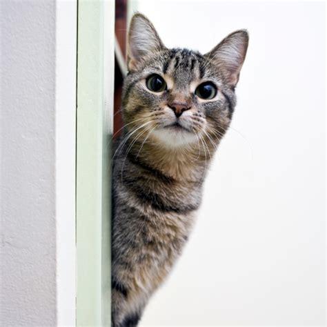 chat interieur ou exterieur faire vivre un chat d ext 233 rieur 224 l int 233 rieur le chat d int 233 rieur vie quotidienne chats
