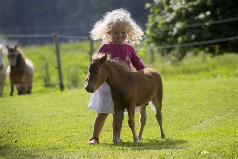 smallest horse tall bluey inches worlds believed away ross metro wil veronica caters jeff give plans