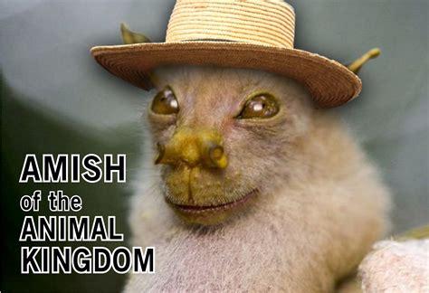 Cute Funny Animal Quotes Quotesgram