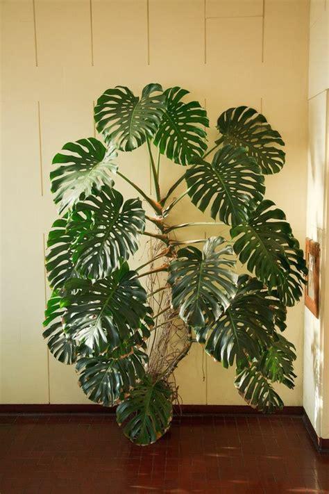 480 Besten Pflanzen Bilder Auf Pinterest