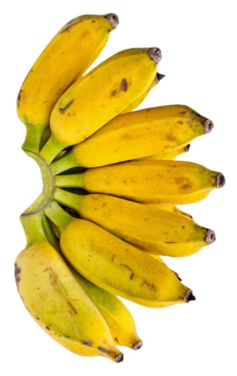 small banana 18 ways that bananas help you to lose weight half the woman i was