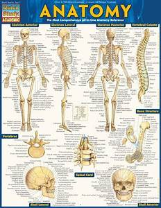Anatomy Quickstudy U00ae Updated Guide Filled With Over 1 400