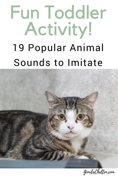 fun toddler activities  popular animal sounds