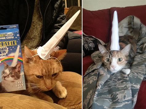 inflatable unicorn horn  cats