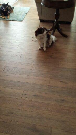 pergo flooring nashville tn modern farmhouse best deals and the o jays on pinterest