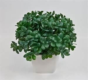 Chinesischer Geldbaum Kaufen : geldbaum pfennigbaum 32cm im dekotopf cg kunstpflanze ebay ~ Michelbontemps.com Haus und Dekorationen