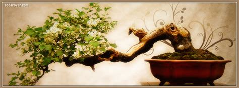 japanese tree facebook covers japanese tree fb covers
