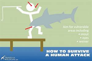 Shark Attacks  What You Need To Know