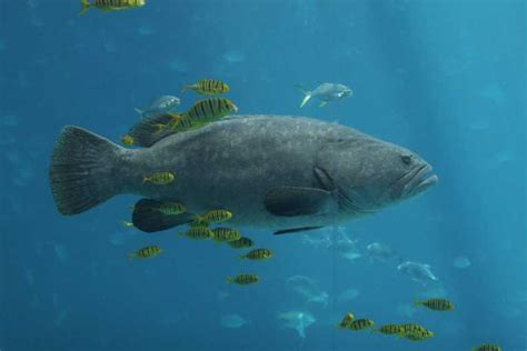 big fish less big fish means more little fish conservation the earth times
