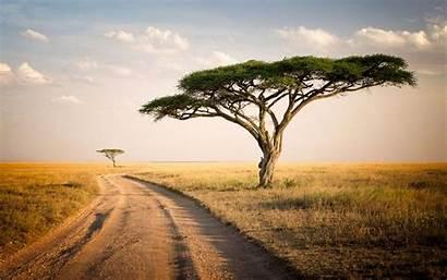 Serengeti Park National Wallpapers Tanzania