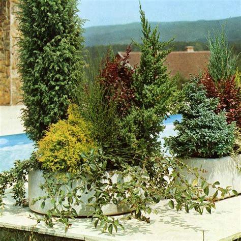 jardins bleus plantes d ext 233 rieur