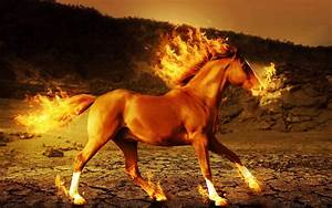 Horse fire 3d art psychedelic g wallpaper | 1920x1200 ...