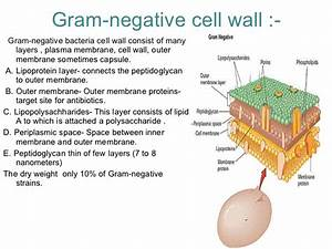 Gram Negative Cell Wall Diagram