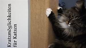 Malzpaste Für Katzen : kratzm glichkeiten f r katzen youtube ~ Orissabook.com Haus und Dekorationen