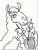 Llama Coloring Pages Face Printable Drawing Knitting Pig Guinea Wool Cartoon Animals Getdrawings Drawings Alpaca Getcoloringpages Hedgehog Flower sketch template