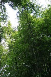 mes bambou plantes jaunissent article teamdemise