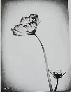 Ralitsa Veleva Artwork: flower   Original Drawing Pencil ...