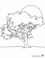 Tree Coloring Lime Pages Nature Trees Hellokids Sheet Outline Para sketch template