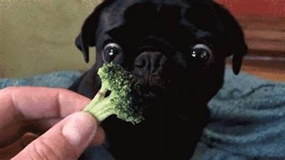 Broccoli Vegetables Dog Animated Gifs Perfect Giphy