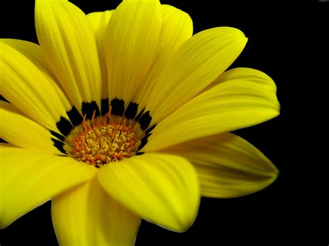 Great Yellow Flower Wallpapers