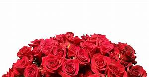 Red Roses White Background Free Stock Photo - Public ...