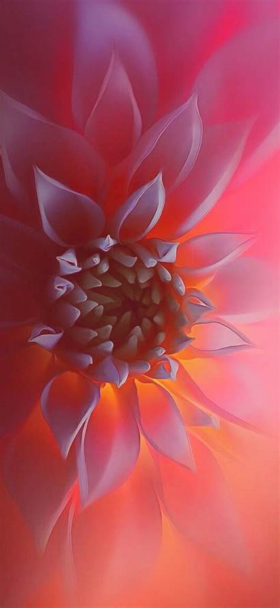 Flower Flowers Nature Translucent Soft Fondos Macro