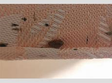 bed bug poop 28 images dr bed bug free education