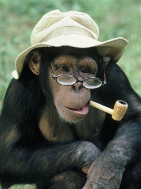 smoking monkeys  pics