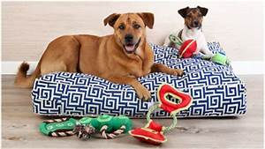 Divani per cani: relax a quattro zampe Dalani e ora Westwing