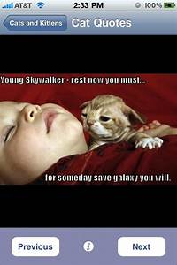 Cute cat pictures with quotes cutest cats amp kittens ...