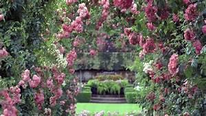 Rose Garden Wallpaper Desktops