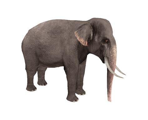 elephant tub india asian elephant rr zoo tycoon wildlife park wiki