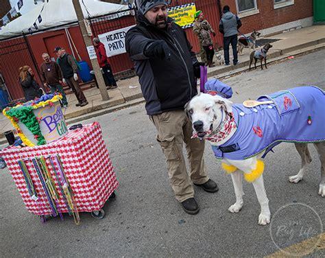 Soulard Mardi Gras Beggin' Pet Parade 2018