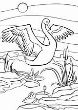 Swan Coloring Coloritura Pagine Birds Sveglio Wings Little Kleurende Leuke Pagina Wonderful Animals Animali Jaguar Piccolo Vogels Zwaan Mooie Mother sketch template