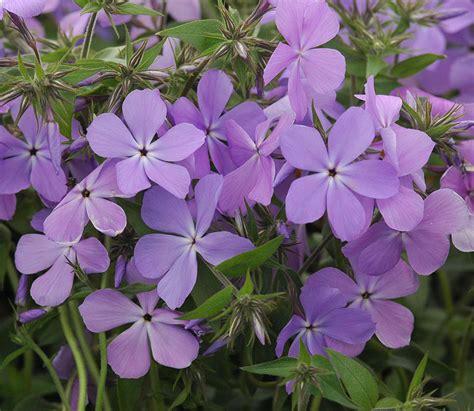 perennial flowers for shade easy perennials for shade costa farms