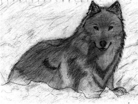 serigala stultus seta