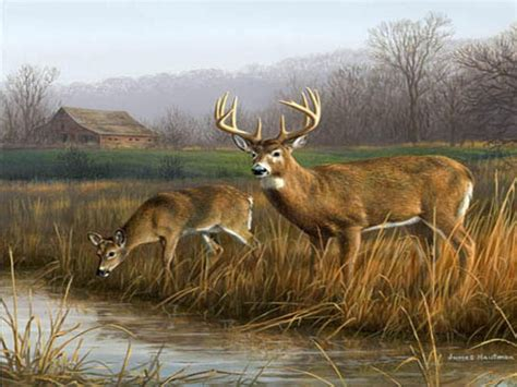 Animal Deer Wallpaper - free deer wallpaper px high resolution