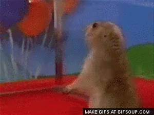 Chipmunk Curses GIFs - Find & Share on GIPHY