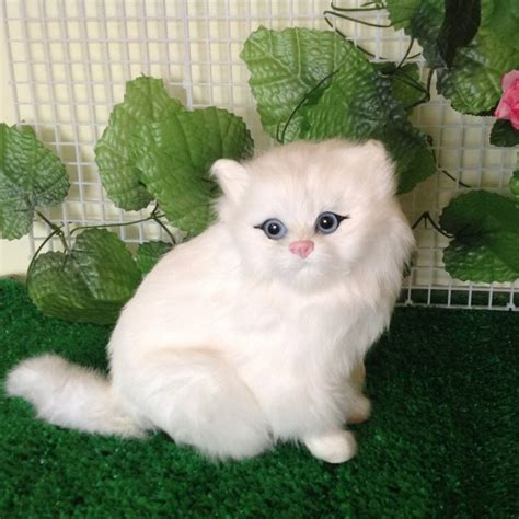 Persian Cat Cartoon  7 Charming Persian Cat Price Range